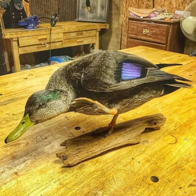 Black Duck Mount
